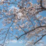 春だ!岡山でお花見しよう!お弁当持って行きたい桜名所7選