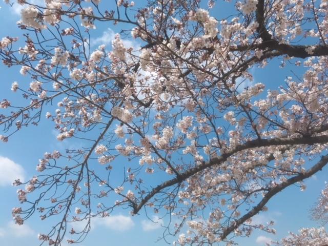 岡山の桜を楽しむならココ☆とっておきの桜名所7選!春爛漫を存分に♪