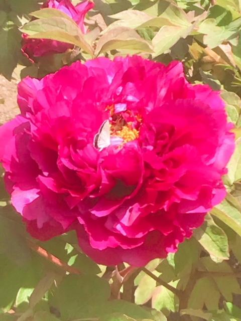 RSKバラ園で四季折々の花を愛でる・・桜もギリギリセーフ!