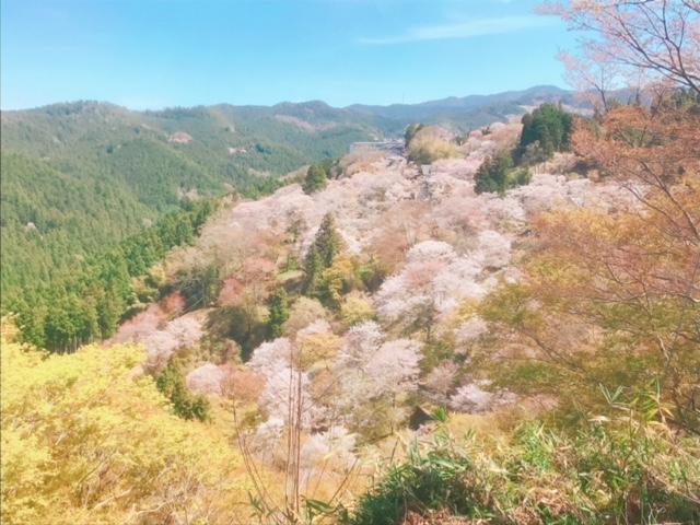 日帰りバスツアーで吉野山へ。桜の見ごろはちょいと過ぎてました県外編
