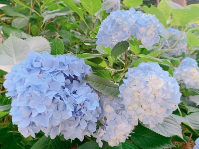 岡山 吉備津神社のあじさいを見に行こう♪境内を和ませる紫のグラデーション