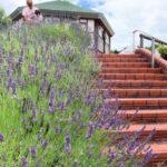 岡山おでかけ まきばの館は6~7月にラベンダーが見頃!流れる小川で水遊び