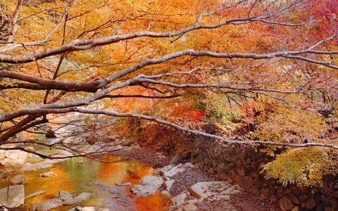岡山の紅葉で癒され旅!井原市の天神狭・鬼ヶ嶽はハイキングにも最適☆