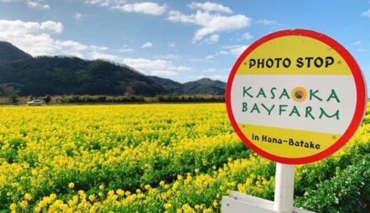 笠岡ベイファームの菜の花が見頃☆春が来た!心の洗濯にでかけよう